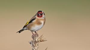 Bird Wildlife 2048x1365 Wallpaper