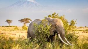 Africa Elephant Mountain Savannah Tusk 2048x1365 Wallpaper