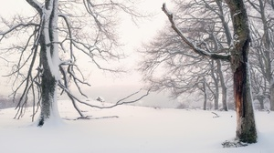 Winter Outdoors Snow Cold Trees 3840x2160 Wallpaper