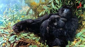 Artistic Baby Animal Gorilla Monkey Painting Wildlife 2631x1757 Wallpaper