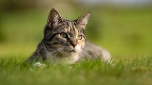 Cat Depth Of Field Pet 3936x2624 Wallpaper