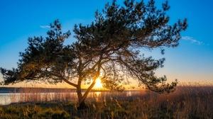 Sunlight Sunset Tree 1920x1200 wallpaper