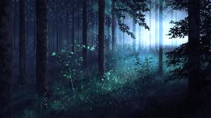 Forest 2560x1440 wallpaper