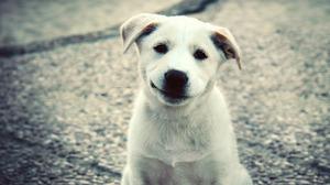 Animal Dog 1920x1200 Wallpaper