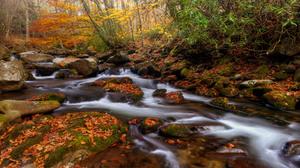 Fall Forest Leaf Rock Stream 2560x1600 Wallpaper