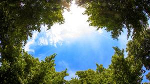 Sky Tree 3840x2400 Wallpaper