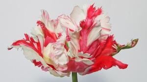 Macro Petal Flower 2048x1365 Wallpaper
