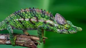 Chameleon Reptile Wildlife 3840x2556 Wallpaper