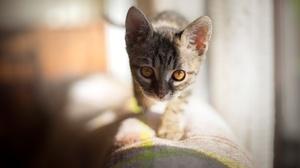 Baby Animal Cat Kitten Pet Stare Sunny 2048x1367 Wallpaper