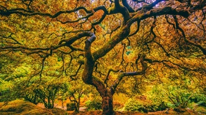 Fall Foliage Nature Tree 2048x1365 wallpaper