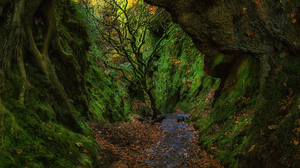 Cave Earth Forest Green Tree 1920x1080 Wallpaper