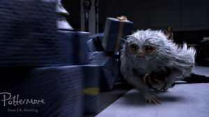 Fantastic Beasts And Where To Find Them 2289x1200 Wallpaper
