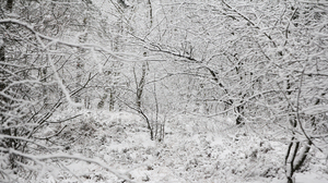 Snow Cold White Nature 3840x2160 Wallpaper