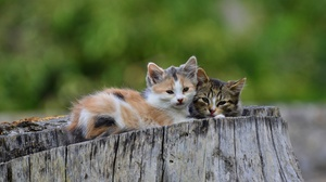 Baby Animal Cat Kitten Pet 2560x1696 wallpaper
