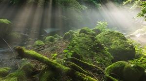 Greenery Moss Nature Rock Sunbeam 3600x2403 Wallpaper