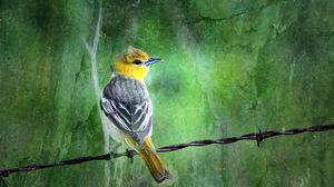 Animal Bird 2560x1600 Wallpaper