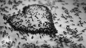 Ant Heart Black Amp White 4928x3264 Wallpaper