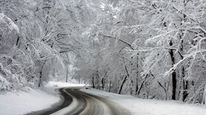 Earth Winter Snow Tree Forest 6144x4096 Wallpaper