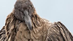 Crow Bird Beak 2048x1296 Wallpaper