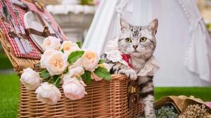 Basket Cat Flower Pet 2048x1365 Wallpaper