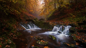 Belgium Fall Forest River Waterfall 1920x1280 Wallpaper