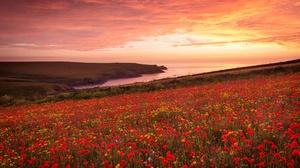 Flower Horizon Landscape Poppy Red Flower Summer Sunset 5120x3417 Wallpaper