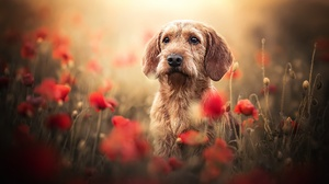 Animal Dog 2048x1152 Wallpaper