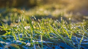 Grass Macro Nature Water Drop 2560x1440 wallpaper