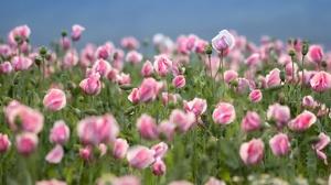 Flower Nature Pink Flower Summer 3600x2400 Wallpaper