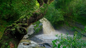 Greenery Moss Nature River Tree Waterfall 2880x1800 Wallpaper