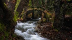 Bridge Forest Moss River Stream 6144x3958 Wallpaper