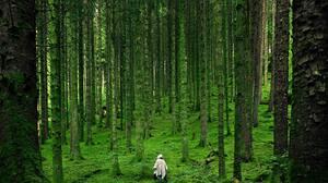 Nature Landscape National Geographic Trees Forest Grass Moss Scottish Highlands UK Scotland Raincoat 1600x1200 Wallpaper
