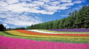 Landscape Cloud Colors Meadow 2560x1600 Wallpaper
