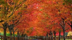 Fall Fence Foliage Tree Tree Lined 2000x1333 Wallpaper
