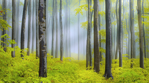 Nature Forest Tree Spring Sunbeam Fog 2048x1366 Wallpaper