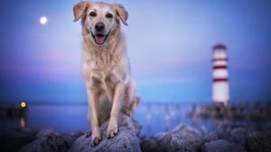 Depth Of Field Dog Golden Retriever Pet Rock 2048x1365 Wallpaper