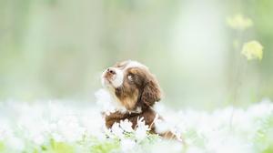 Dog White Flower Pet Blur 2560x1675 Wallpaper