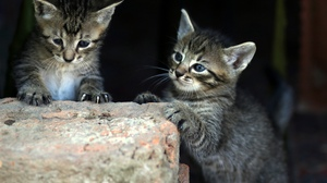 Baby Animal Cat Kitten Pet 2560x1836 wallpaper