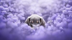Dog Flowers Plants Animals Mammals 3840x2160 Wallpaper