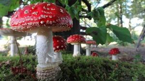 Fall Macro Mushroom Nature 2309x1299 Wallpaper