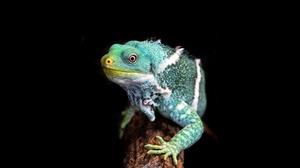 Animal Iguana 5184x2916 Wallpaper