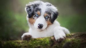 Outdoors Animals Dog Mammals Blue Eyes 2048x1365 Wallpaper