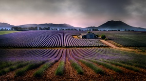 Mountain Nature House Field Lavender 4000x2250 wallpaper