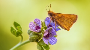 Animal Butterfly 2048x1365 Wallpaper