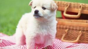 Cute Puppy 2560x1600 Wallpaper