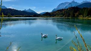 Bird Swan Pond 3000x2250 Wallpaper