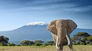Elephant Savannah Wildlife 2000x1414 wallpaper