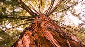 Earth Tree Canopy 2048x1365 Wallpaper