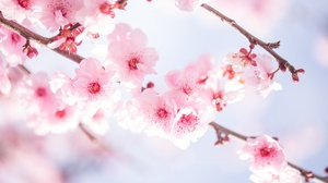 Blossom Branch Flower Nature Pink Flower Spring 2048x1365 Wallpaper