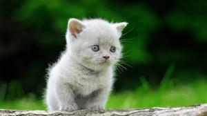 Outdoors Animals Mammals Cats Kittens Feline Nature 2560x1703 Wallpaper